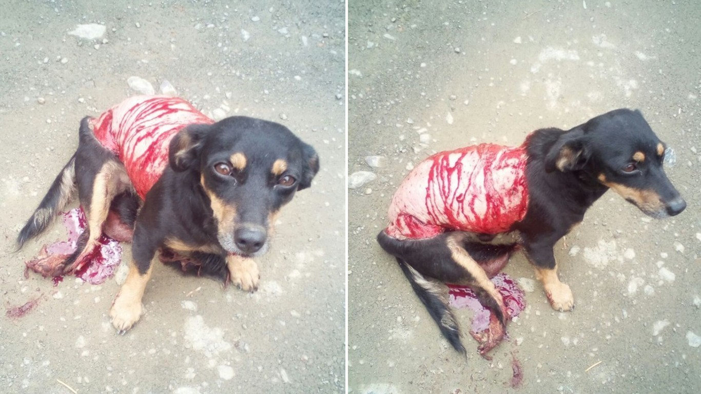 Petition: Justice for dog skinned alive and thrown on the street to die!
