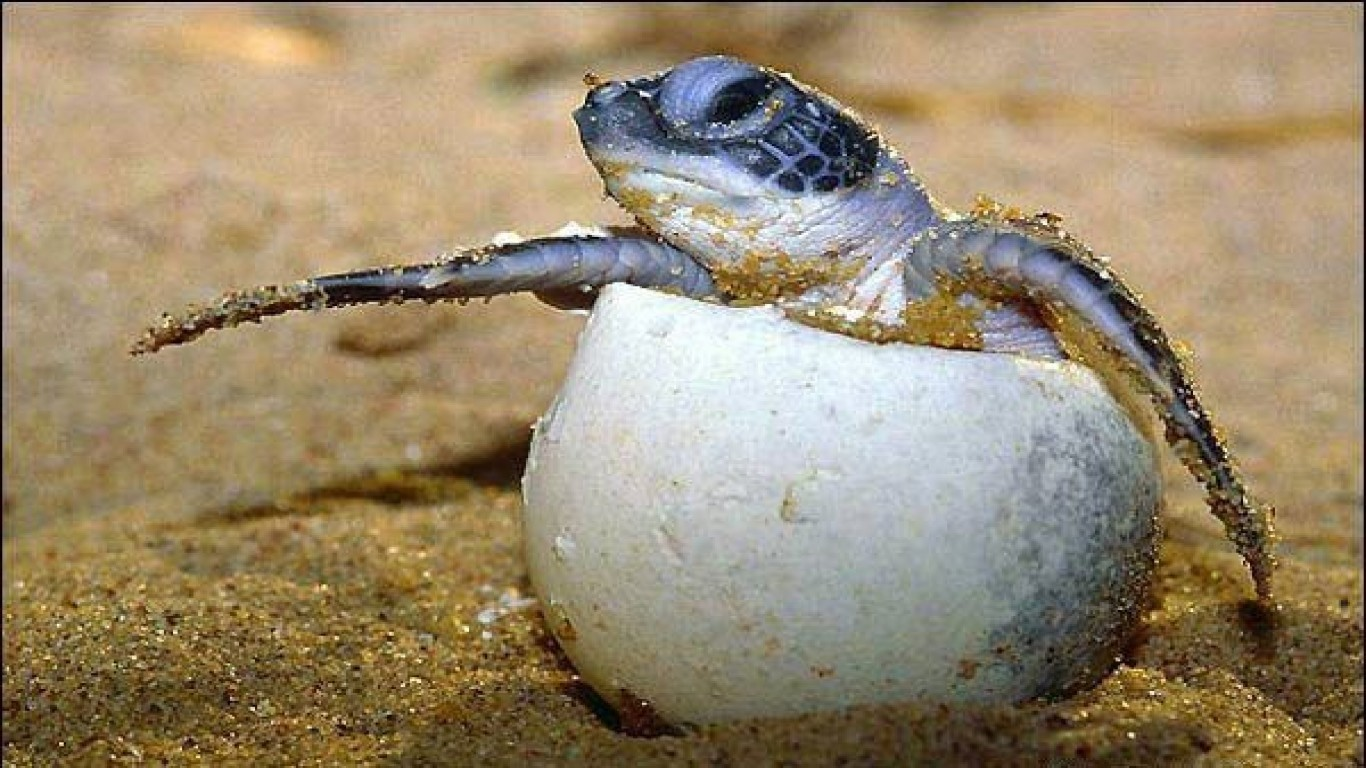 Stop The Harvesting Of Endangered Turtle Eggs