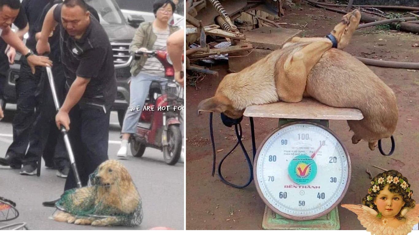 Petition: China – Countless dogs are stolen and sold as food in public markets every day!