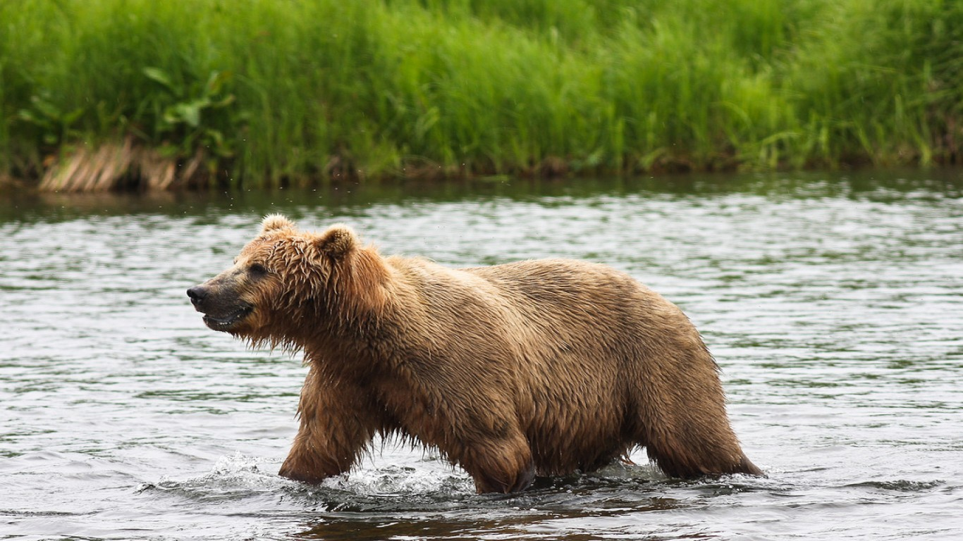 Protect the Kenai Brown Bears