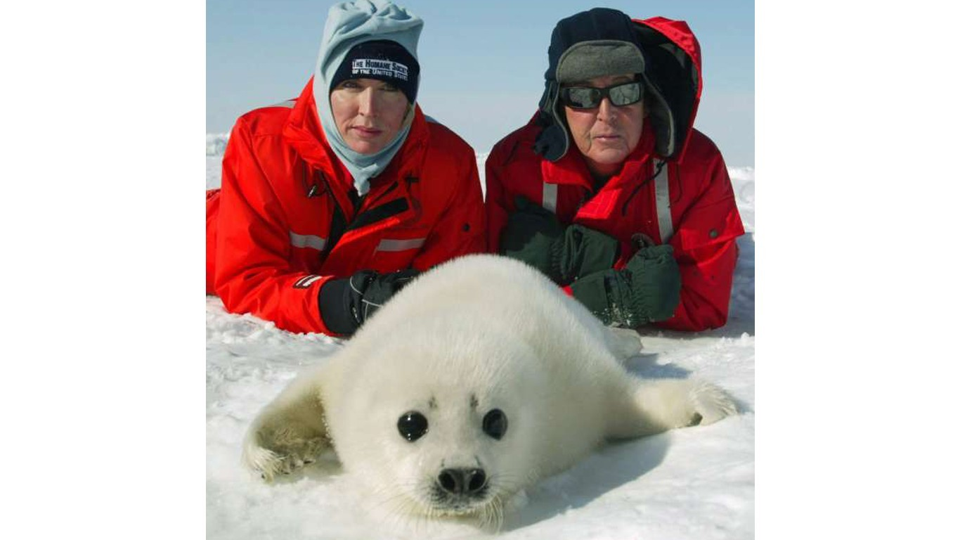Urge Canada to protect the seals!